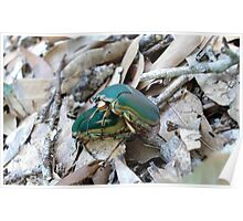 GREEN JUNE BEETLES MATING Poster