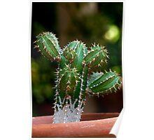 Cactus on Pot Poster