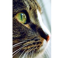 A close up of a cat with green eye Photographic Print