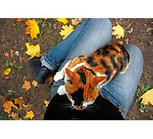 cat sitting on legs in autumn Photographic Print