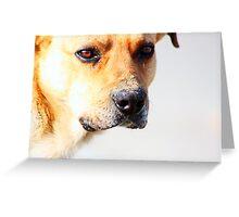 Close up of an beautiful sad yellow dog Greeting Card