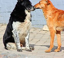 two dogs  by a1luha