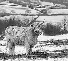 Highland Cow In The Snow by Linsey Williams