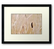 The odd one out Framed Print