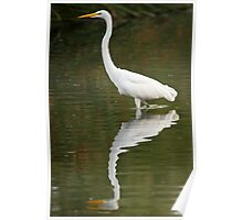 Reflection of an Egret Poster