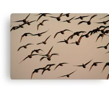 Brent geese at sunrise Canvas Print