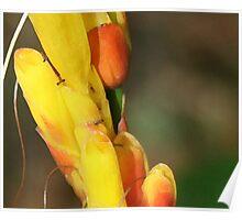 Romantic Lovely Peach & Yellow Hawaiian Flower Poster