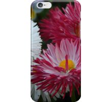 Pink and white Daisy iPhone Case/Skin