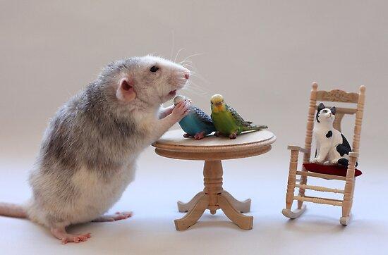 I love my birds :) by Ellen van Deelen