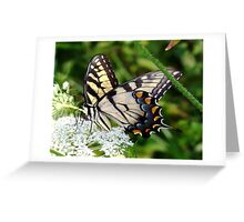 A male Eastern Tiger Swallowtail having lunch. Greeting Card
