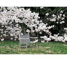 Alone Again at The Arboretum Photographic Print