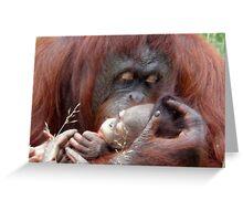 Bornean orangutan Greeting Card