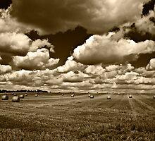 Harvested Hay Field Sepia by ArtforARMS