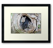 Two's Company / Baby Squirrels Framed Print