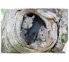 Two's Company / Baby Squirrels Poster