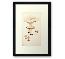 Coloured figures of English fungi or mushrooms James Sowerby 1809 0265 Framed Print