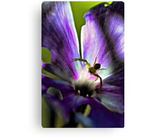 Lavender Fall Phlox - Yellow Spider Canvas Print