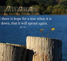 Hope For A Tree by James Eddy