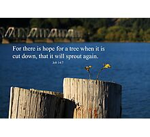Hope For A Tree Photographic Print