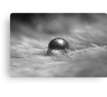 Silver Pigment on Water Droplet and Feather Canvas Print