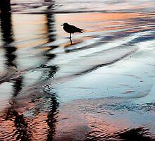 Sunset Beach 104 by Debbie Lucas