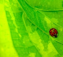 The life of the leaf party! by MarianBendeth