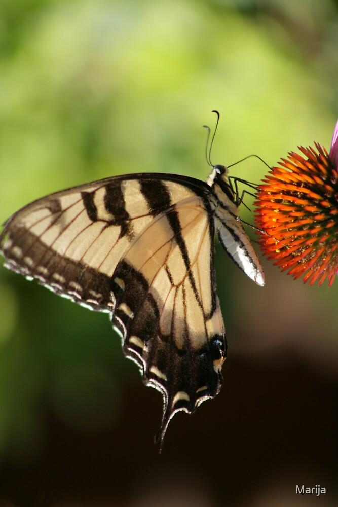 Winged Beauty by Marija