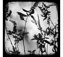 Died Pretty - TTV Photographic Print