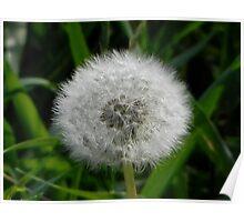 Nikon Flower Large 2 Poster