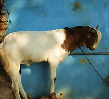 goat  by jerra