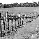 The Winter Vineyard by pennyswork