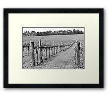 The Winter Vineyard Framed Print