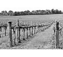 The Winter Vineyard Photographic Print