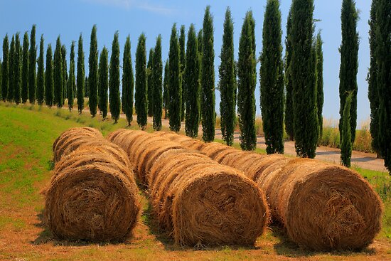 Tuscan Hay by Inge Johnsson