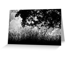 The Wind Beyond the Trees Greeting Card