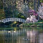 Duke Gardens, Duke University by Alison Simpson