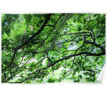 Green Leaves- Blue Ridge Parkway Poster