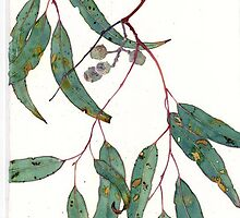 gum leaves by Gabby Malpas