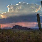 Cactus at Sunset at Picacho Peak Arizona by MattGranz