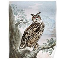 Great Horned Owl Illustration Poster