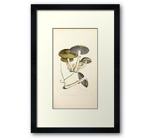Coloured figures of English fungi or mushrooms James Sowerby 1809 0141 Framed Print
