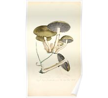Coloured figures of English fungi or mushrooms James Sowerby 1809 0141 Poster