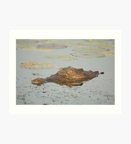 Saltwater Crocodile Art Print