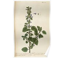 A curious herbal Elisabeth Blackwell John Norse Samuel Harding 1737 0348 Black or Stinking Horehound Poster