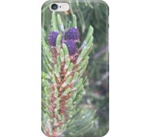 New Pine Cone iPhone Case/Skin