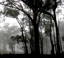 Gumtrees in the park, Picnic Point, Toowoomba. by Marilyn Baldey