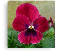Viola Flower - Up Close Canvas Print