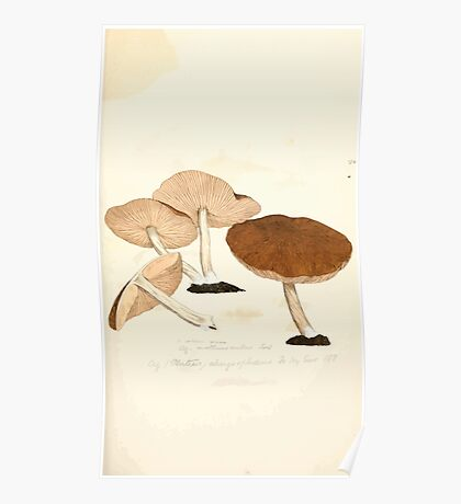 Coloured figures of English fungi or mushrooms James Sowerby 1809 0457 Poster