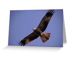 Wedge Tail Eagle Darwin Australia Greeting Card