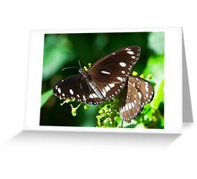 Butterfly on Display Greeting Card